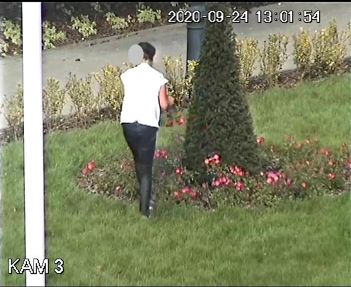 pl. Jana Pawła II, kobietę zrywającą kwiaty z klombu