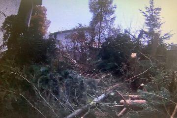 Ul. Miodowa, współpraca z WGK UM w celu ustalenia, parametrów ściętych drzew w wyniku nielegalnego działania,