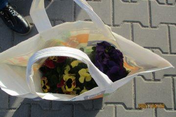 Kradzież kwiatów