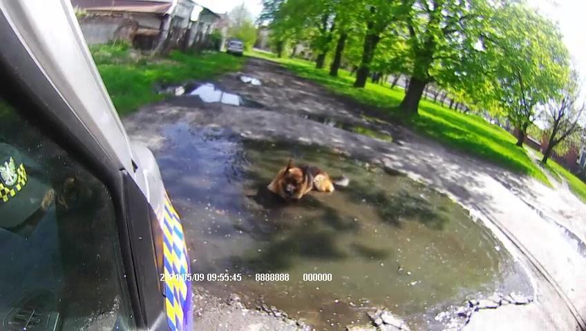 Błąkający się pies bez nadzoru.